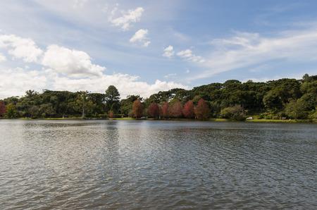 Great concept of autumn, beautiful trees of the genus Platanus with reddish leaves signaling the fall, San Bernardo lake in San Francisco de Paula, Brazil.