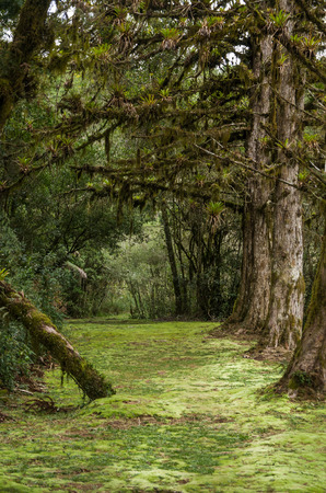 Mystical green forest of Brazil, mossy ground.