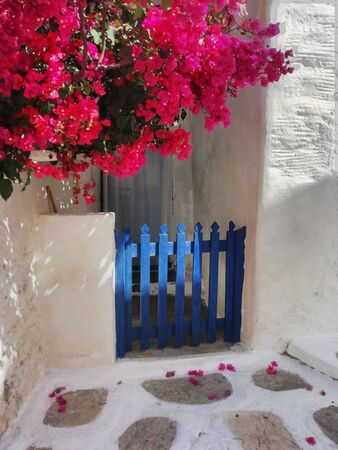 An old fashioned blue gate with bougainvillea in the old town on the Greek Island of Sikinos