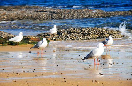 seabird: Seabird on the beach