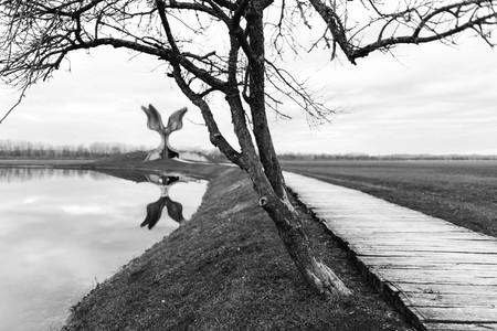 강가의 나무