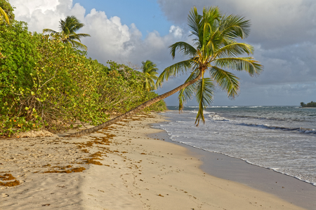 Grande Terre beach - Near Salines beach - Sainte Anne - Martinique FWI