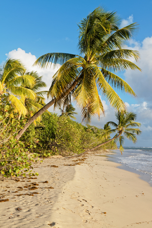 Grande Terre beach - Near Salines beach - Sainte Anne - Martinique FWI Stock Photo