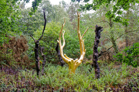 The Golden Tree in Broceliande Forest - Paimpont Forest - Brittany - France Stock Photo