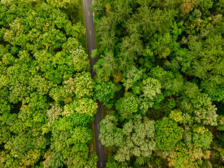 Aerial view of the canopy and a road of Touraine, Loire Valley, France