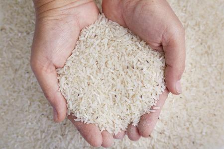 weevil: Rice weevil in hands Stock Photo