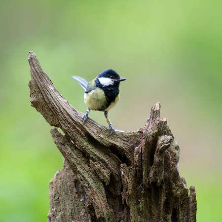 songbird: A photo of a songbird