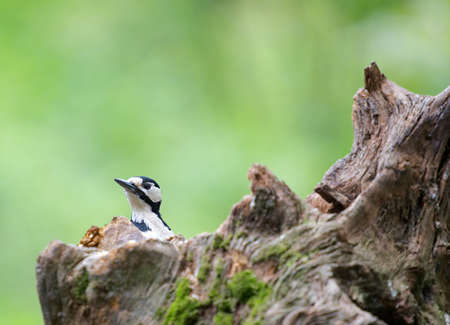 A photo of a woodpecker Stock Photo