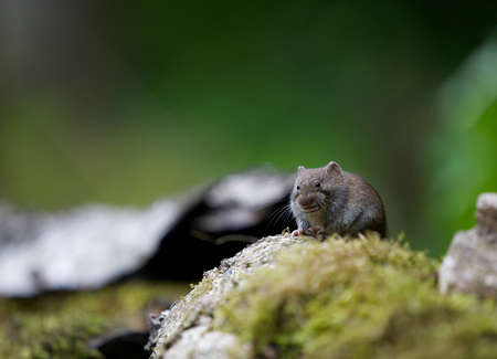 A photo of a mouse Stock Photo