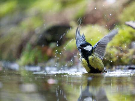 A photo of a songbird