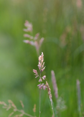 A photo of a grass halm