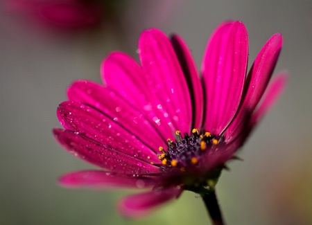 A photo of a pink flower Stock Photo