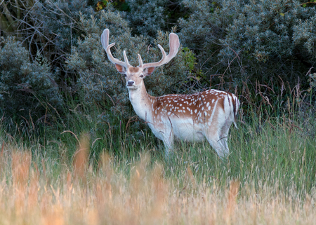 A photo of a deer in the wild photo