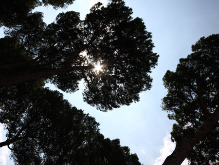 A photo of trees Stock Photo