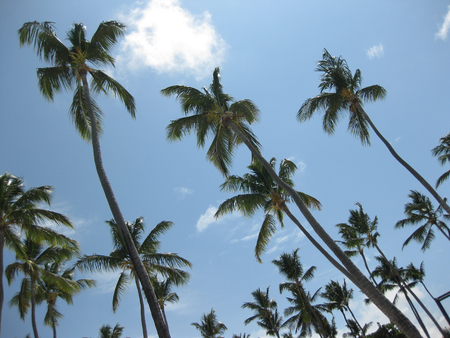 A photo of palm trees