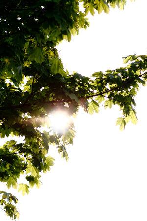A photo of the sun through a tree