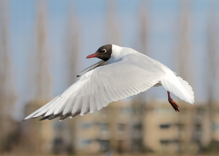 A photo of a seagull  Stock Photo