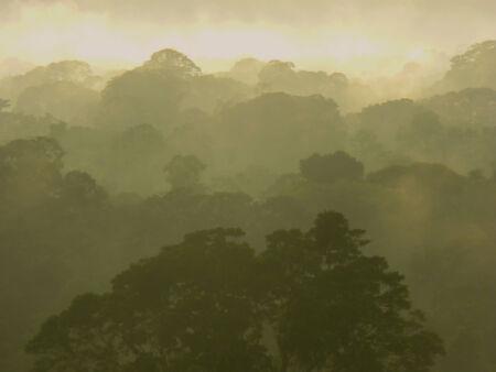peru amazon: Amazon jungle in Peru