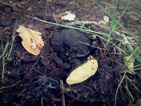 hidden danger: Hiding toad