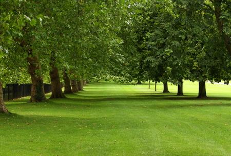 Sycamore e cavallo castagni in piena foglia in una giornata d'estate ventosa s in un parco pubblico verde