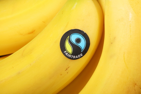 promotes: BRACKNELL, ENGLAND - June 02, 2014  Imported bananas bearing the Fairtrade Foundation sticker  Founded in 1992 the organisation promotes global trade with marginalised workers and their communities