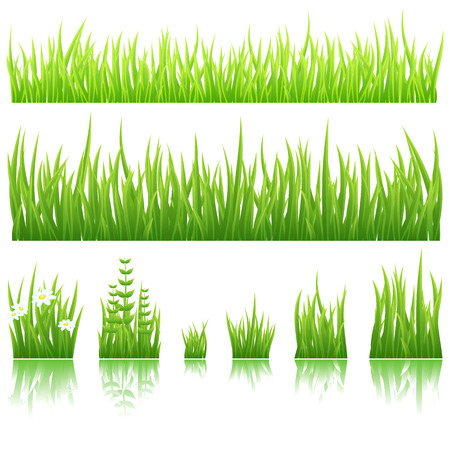 Different types of green grass isolated on white background.