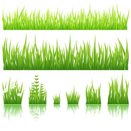 Różne typy zielona trawa samodzielnie na białym tle.
