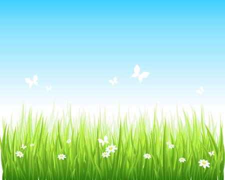 illustration grassy green field and blue sky. Stock Vector - 7744849