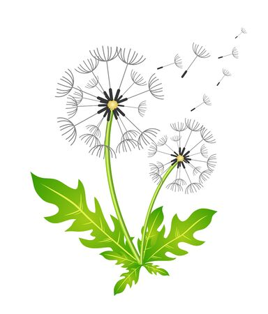 dandelion wind: Dandelion. Vector illustration. In the wind. Color image. In the wind.