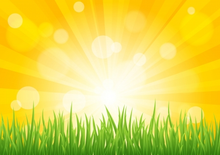 Bright sun effect with green grass field. Vector