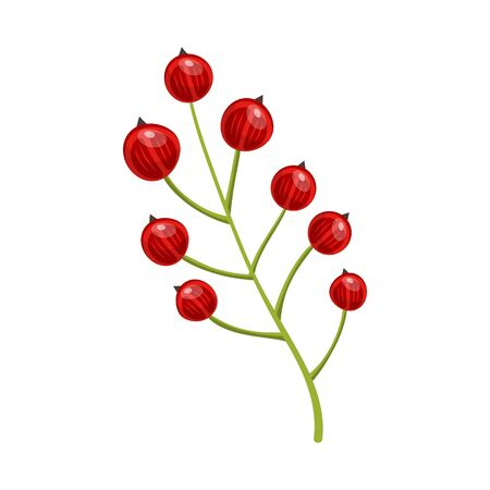 Red currant berries. Set of hand drawn vector illustrations of sprigs of redcurrant with bunch of berries and green leaves on white background