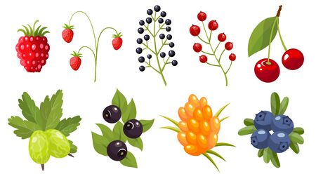 Collection of twigs of wild berries. Forest berry. Sweet fruit