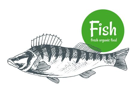 Hand drawn vector fish. Fish and seafood products store poster. Sea food fishery and ocean fishing catch. Can use as restaurant fish menu or fishing club banner.