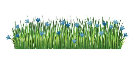 Green grass border. Fresh green cornflower and branches grass. Isolated on transparent background. Vector Illustration for use as design element Illustration