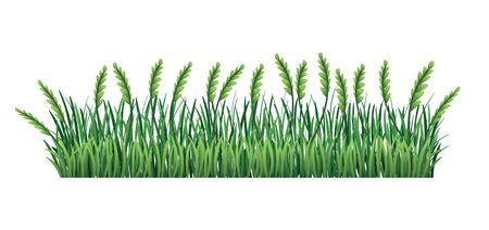 Green grass border. Fresh green spikelet and branches grass leaves. Isolated on transparent background. Vector Illustration for use as design element Illustration