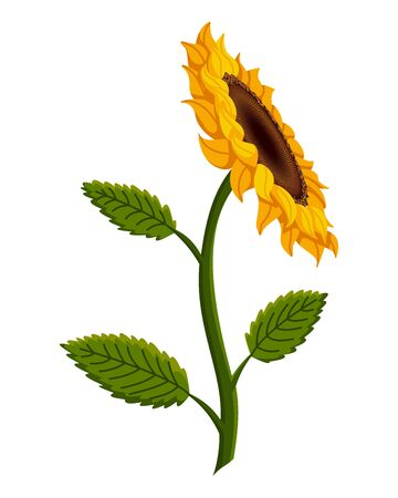 Sunflower blossom. Hand drawn sunflower with green leaves. Decorative floral design elements for invitations and cards Stockfoto - 149401482