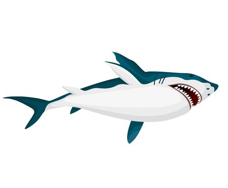 Shark. Big dangerous marine predator. Toothy swimming angry shark. Underwater character of sea animal. Vector illustration of Marine wildlife
