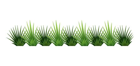Green grass border. Fresh green brush grass. Isolated on transparent background. Vector Illustration for use as design element Illustration