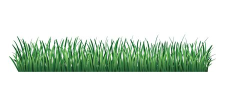 Green grass border. Fresh green grass. Isolated on transparent background. Vector Illustration for use as design element. Illustration