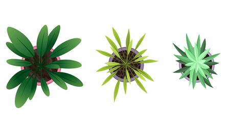 Collection of plant top view in pots. Home plant set. Cactus, green leaves concept. Interior house gardening design. Set of different house plants with