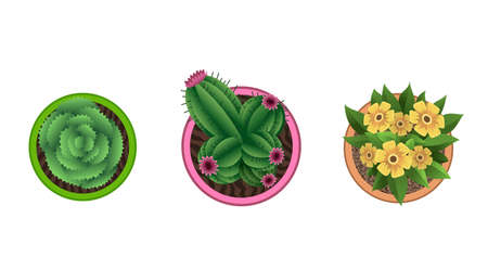 Plant top view in pots. Home plant set. Cactus, green leaves concept. Interior house gardening design. Set of different house plants with flowers. Vektorgrafik