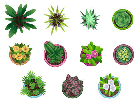 Collection of plant top view in pots. Home plant set. Cactus, green leaves concept. Interior house gardening design. Set of different house plants with flowers