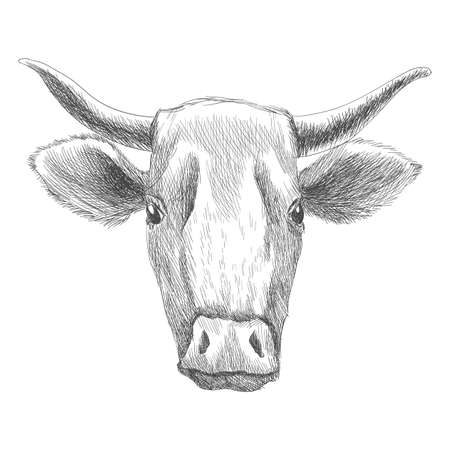 Hand drawn animal. Farm livestock. Vintage vector engraving illustration for poster or web. Hand drawn cow sketch in a graphic style Vector Illustration