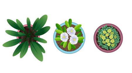 Plant top view in pots. Home plant set. Cactus, green leaves concept. Interior house gardening design. Set of different house plants with flowers Ilustração