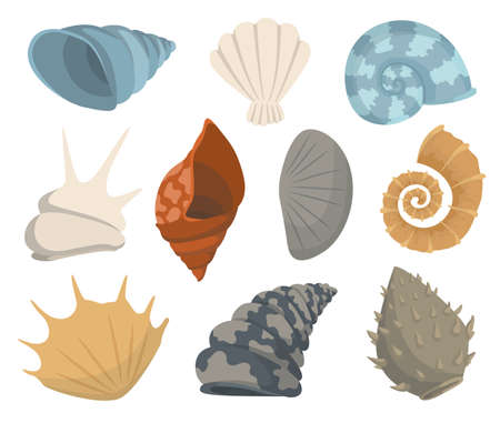 Colorful tropical sea shells underwater icon collection. Marine set cute stickers on the white background. Vector illustration. Perfect for invitations, greeting cards posters banners and flyer
