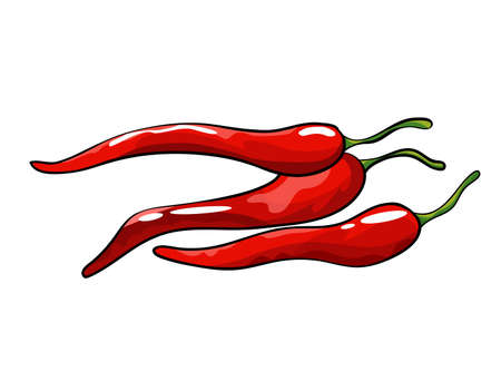 Hand drawn chili pepper. Isolated hot spicy mexican pepper on white background. Natural healthy food. Spicy ingredient Vector Illustratie