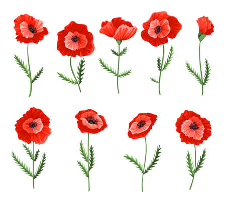 Poppy flowers. Collection of watercolor hand drawn poppies. Isolated botanical symbols of blooming red poppies blossoms. Floral design for decor or holiday wedding greetings cards template