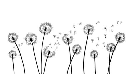 Dandelion time background. The wind inflates a dandelion. Black silhouette with flying dandelion buds on a white. Hand drawn flying blow dandelion buds 免版税图像 - 157384556