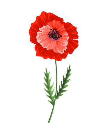 Poppy flower. Watercolor hand drawn poppy. Isolated botanical symbol of blooming red poppy blossom. Floral design for decor or holiday wedding greeting card template Illustration