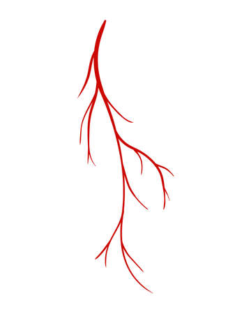Human veins. Red silhouette vessel, arteries or capillaries on white background. Concept anatomy element for medical science. Vector isolated symbol of blood system